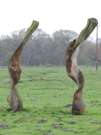 A pair of twisted trees - near Redgrave, Norfolk, England TwistedWood Twisted Tree Nature Tree Trunk Tree Dead Tree
