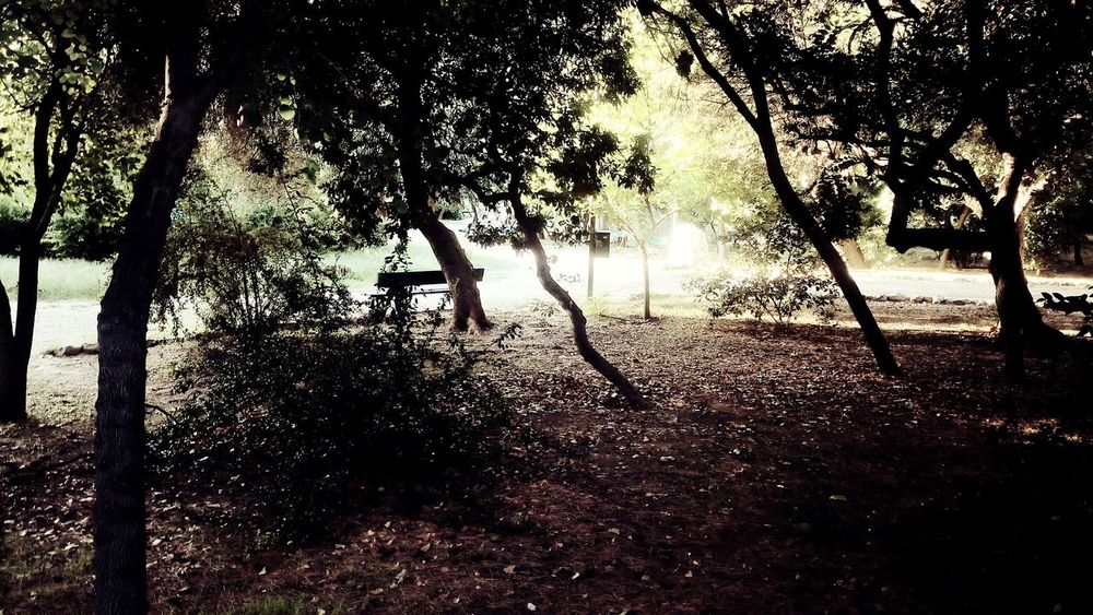 Nature City Gree Ambient Light Outline Light And Shadow Thisio Athens Greece