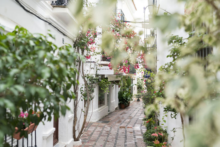 Marbella MarbellaOldTown Old Town SPAIN Architecture Spanish Architecture Holiday Destination Vibrant Color Plant Flower Flowering Plant Growth Beauty In Nature Built Structure Freshness Day Selective Focus Building Exterior Footpath Outdoors No People Potted Plant Springtime Flower Pot Plants