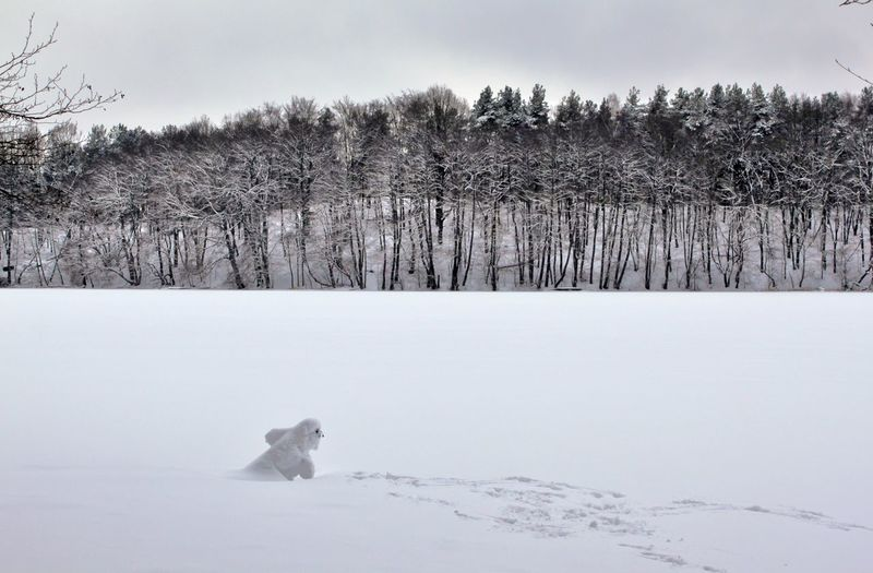 Dog running on snow field against sky