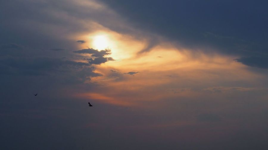 Sky Cloud - Sky Sunset Beauty In Nature Bird Vertebrate Flying Scenics - Nature Silhouette Tranquility Orange Color Nature Low Angle View Idyllic