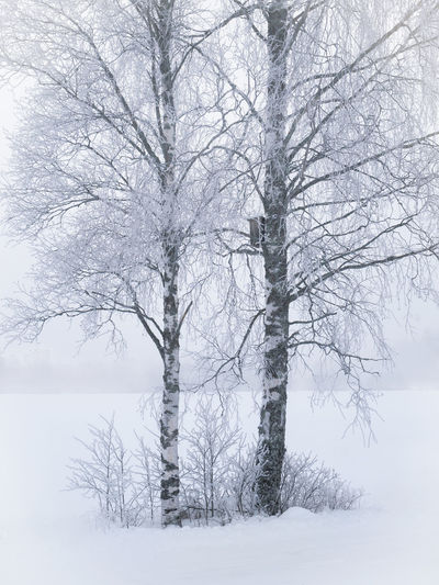 Misty landscape with trees and fog at winter morning in Finland Tree Winter Cold Temperature Beauty In Nature Plant Tranquility Bare Tree Tranquil Scene Scenics - Nature No People Environment Blizzard Snow Non-urban Scene Finland Foggy Misty Mist Moment Of Silence Birch Tree White Background Atmospheric Mood Landscape Winter Morning