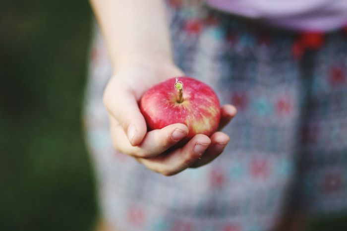 Human Hand Child Fruit Women Healthy Lifestyle Red Holding Summer Apple - Fruit Young Women Handful Apple Tree Apple