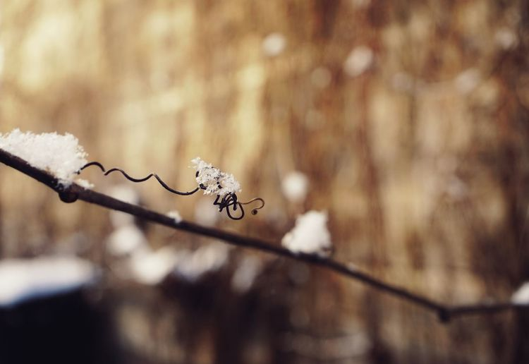 SONY A7ii Sunlight Plant Liana EyeEm Selects Winter Nature Cold Temperature Close-up No People Day Outdoors Beauty In Nature