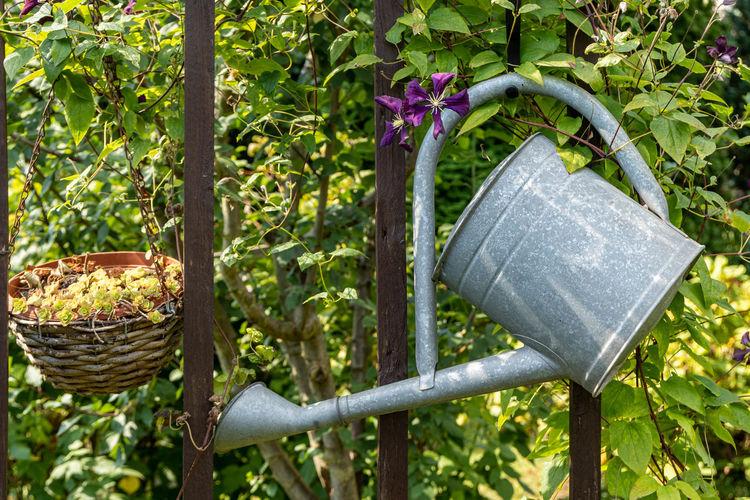 Close-up of flower pots hanging on wicker basket