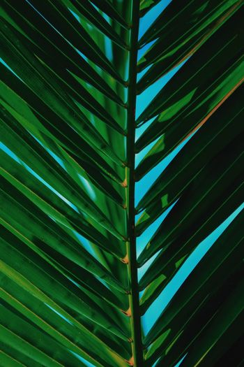 Summer Life Greece Corfu Canon 70d Canon Leaf Plant Part Growth Green Color Palm Tree Full Frame Backgrounds Close-up Nature Palm Leaf Plant Pattern Beauty In Nature Natural Pattern