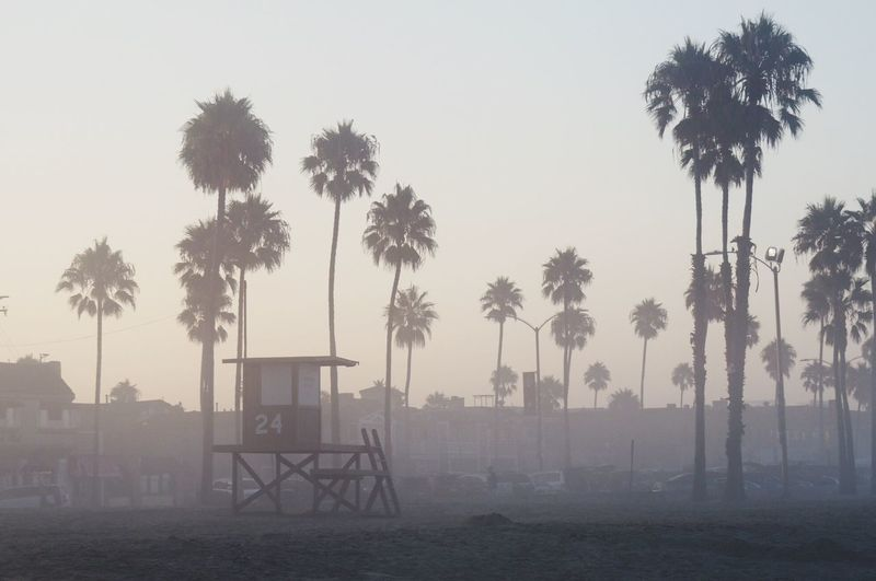 Morning mist at the beach Tree Palm Tree Sky Outdoors Fog No People Tree Trunk Beach Day Nature Beauty In Nature Lifeguard Hut Sunrise Morning Light Tranquility Calm California California Coast Line