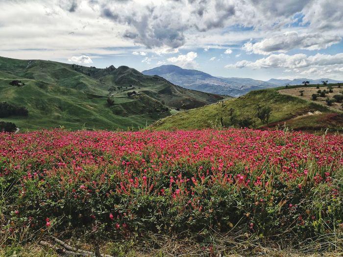 Flower Tree Mountain Beauty Rural Scene Agriculture Red Springtime Sky Landscape