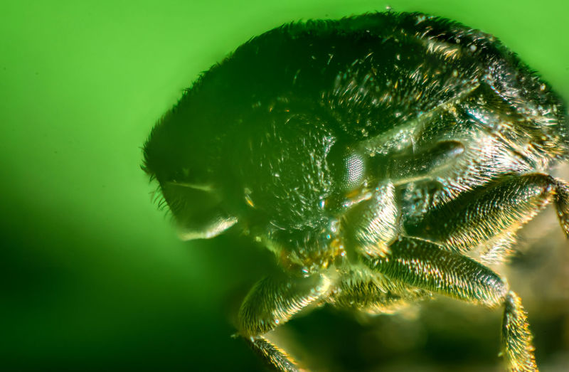Bug Bugs Close-up Day Green Color Insect Macro Macro Photography Makro Makro Photography Nature No People
