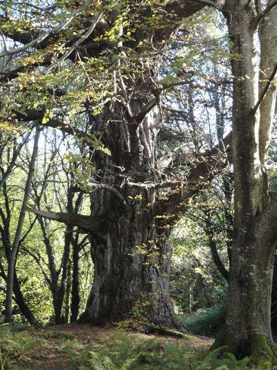 Bark Branch Day