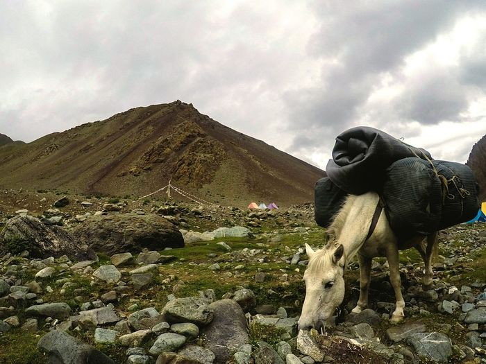 View of a horse on landscape