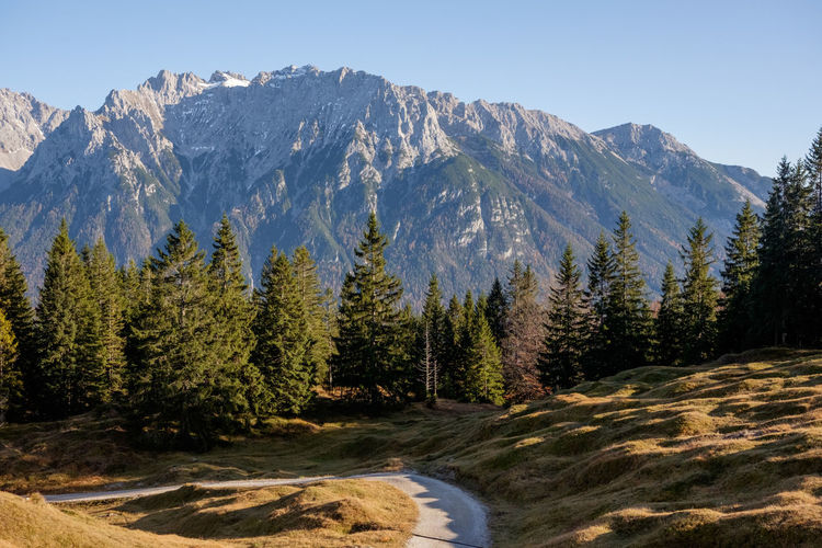 Scenic view of pine trees by mountains against clear sky