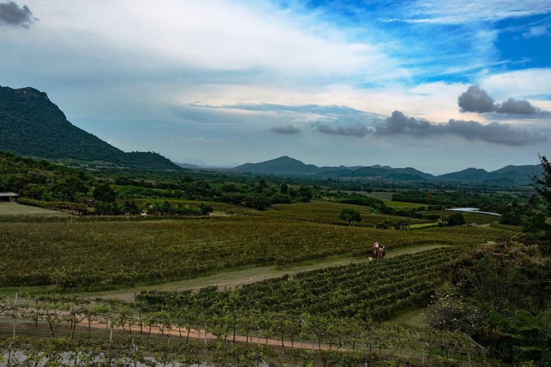 Hua Hin Thailand Vinyard Leicaq LEICA Q Landscape Landscape_photography Elephant Wine Food And Drink Sky Mountain Scenics Beauty In Nature Field Nature Cloud - Sky Real People Outdoors Tranquility Day EyeEmBestPics EyeEm Best Shots