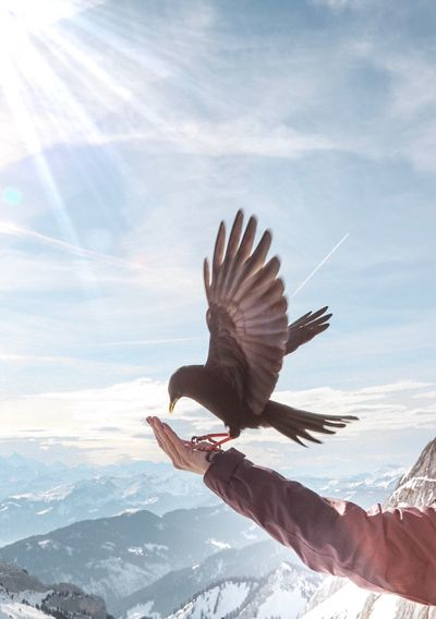 Bird perching on human arm against mountains
