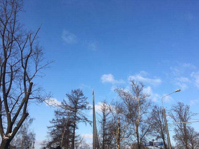 Москва Tree Low Angle View Bare Tree Day Nature No People Sky