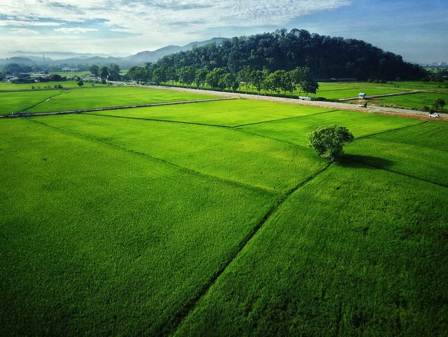 Agriculture Field Farm Green Color Nature Landscape Rural Scene Beauty In Nature Outdoors Growth Social Issues Grass No People Tea Crop Day Mountain Scenics Rice Paddy Tree Freshness Sommergefühle