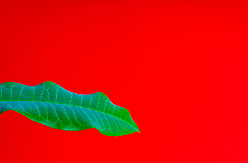Close-up of green leaves against red background