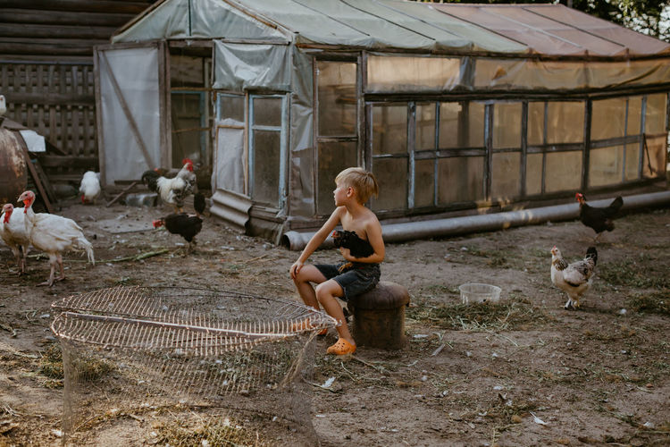 Full length of boy holding hen sitting at poultry