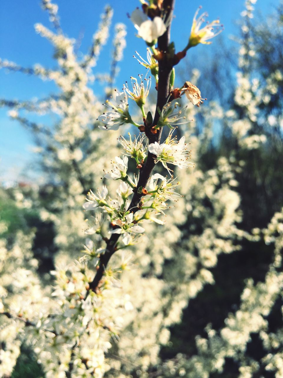 growth, nature, flower, fragility, blossom, beauty in nature, tree, bee, day, no people, selective focus, insect, sunlight, outdoors, plant, freshness, springtime, close-up, flower head, animal themes