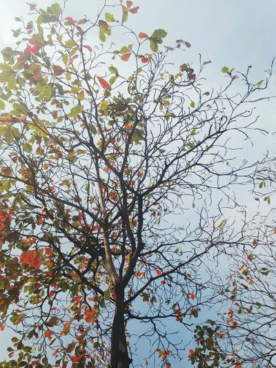 Low Angle View Tree Branch Beauty In Nature Clear Sky Calmness Fall Season Simply Beautiful Orange Leaves Tree And Sky