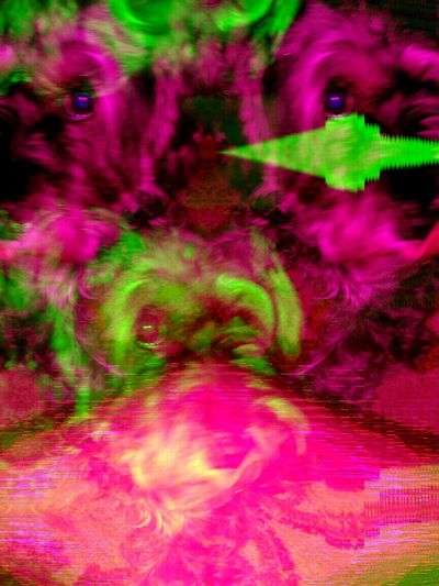 Green Color Abstract Multi Colored Vibrant Color Dog Glitch Art Pet Glitch Experiment Psychedelic Psychedelicart Experimental