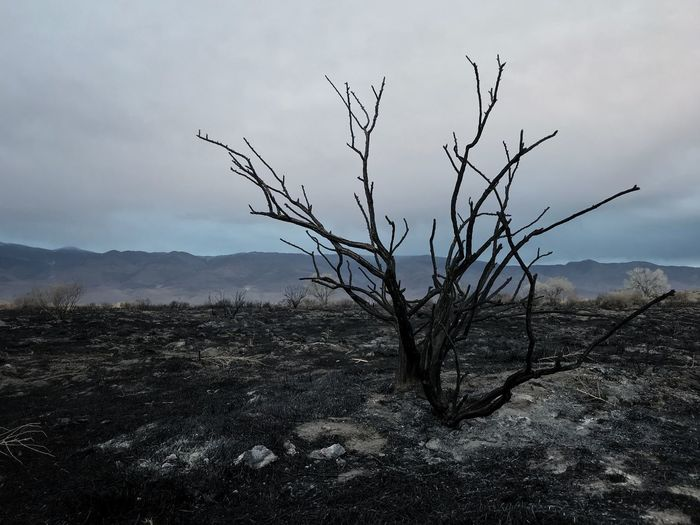 Photo 2 of the series 'Devastation' Burned Burnt Burned Tree Dead Moody Fire Dark Sad Landscape Bare Tree No People Dead Tree