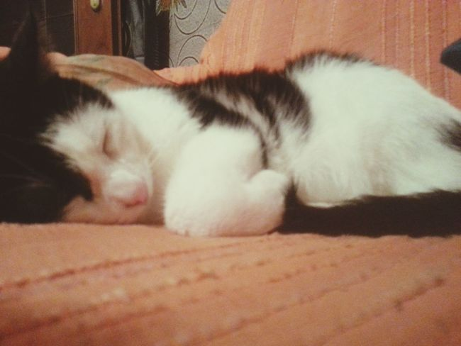 I Love My Cat ❤ Unicograndeamore