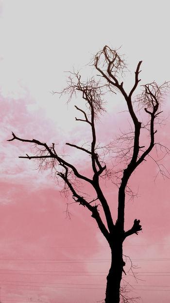 summer evenings Winner Evening Summer AWARD Hope Pink Pink Color Pink Sky Pink Color Pink Life Blackandwhite Environment Tree Bird Branch Rural Scene Sunset Silhouette Sky Landscape Single Tree Sky Only Meteorology Bare Tree Dead Plant Fruit Tree Foggy HUAWEI Photo Award: After Dark Urban Fashion Jungle #urbanana: The Urban Playground EyeEmNewHere