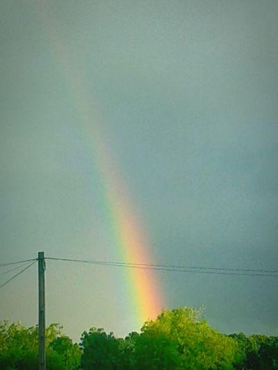 Rainbow Colours Prismacolor