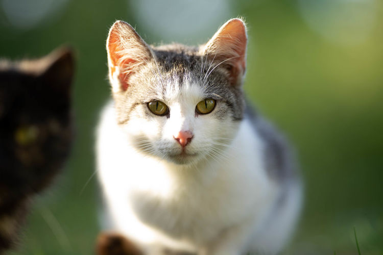 Close-up portrait of cat against blurred background