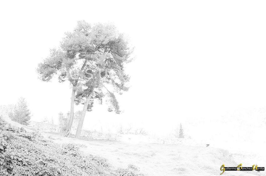 Nature Naturephotography Blackandwhite Blackandwhite Photography Black & White Blackandwhitephotography Blancoynegro Blanco Y Negro Arbol De Navidad Tree First Eyeem Photo