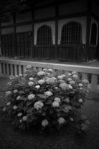 Japanese Temple Architecture Flowering Plant Flower Plant