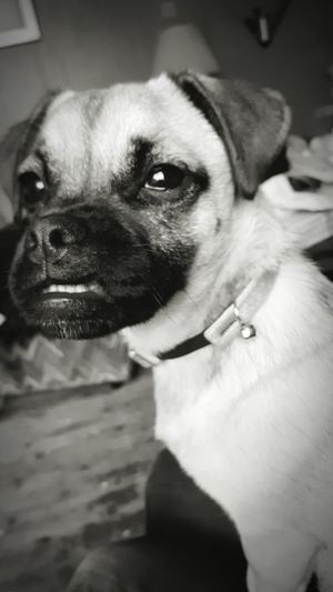 B+W Puppie Photography Smile And Your Framed A Smile A Day Keeps The Dr Away. Bet You Smile When U See Me.