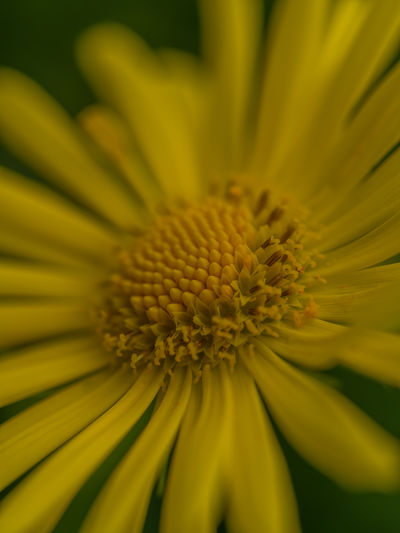 yellow flower head Nature Yellow Flower Backgrounds Beauty In Nature Blooming Close-up Day Detail Of Flower Floral Floral Pattern Flower Flower Head Fragility Freshness Full Frame Garden Growth Nature No People Outdoors Part Of Flower Head Petal Plant Pollen Yellow