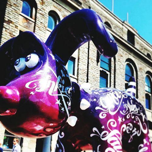 Bristol Art Exhibition Wallace & Gromit 超級無敵掌門狗 Colours Dogs