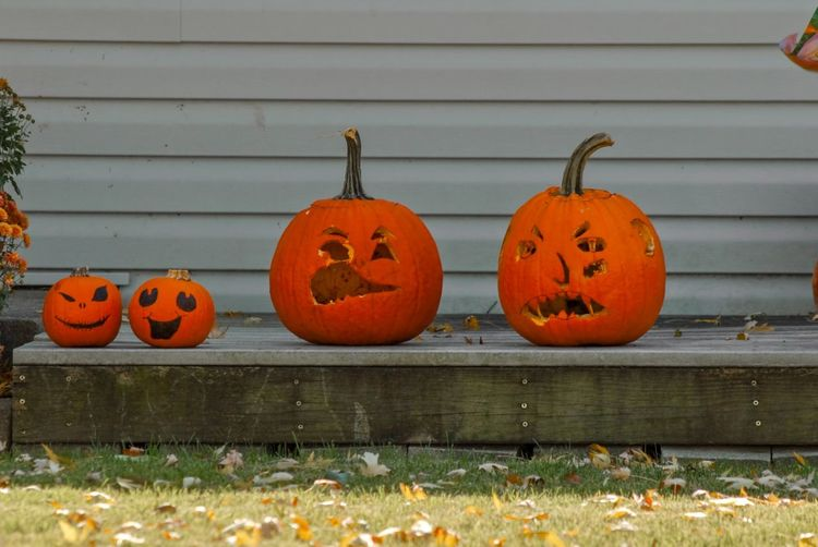 View of pumpkins during autumn