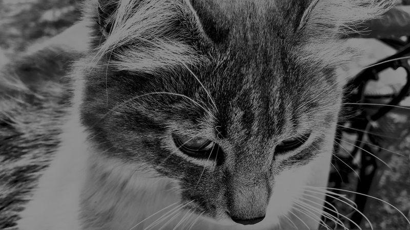 Cat Lovers Cat
