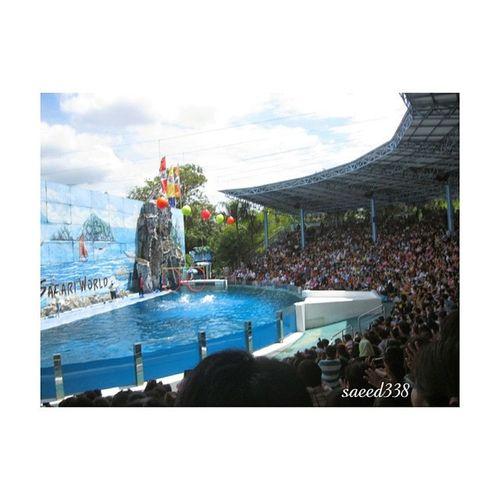 تايلند عروض -الدلافين صوره المسافرون المصورون_العرب