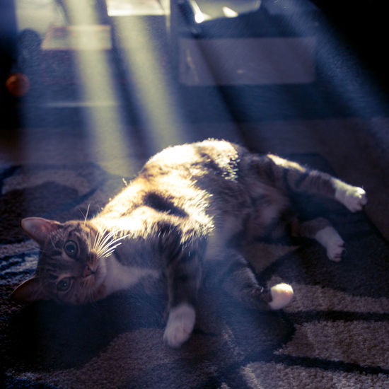 Atmosphere Animal Animal Themes Atmospheric Mood Brown Tabby Cat Day Domestic Domestic Animals Domestic Cat Feline Feline Portraits Full Length High Angle View Lying Down Mammal Nature No People One Animal Pets Relaxation Resting Sunlight Vertebrate Whisker Inner Power