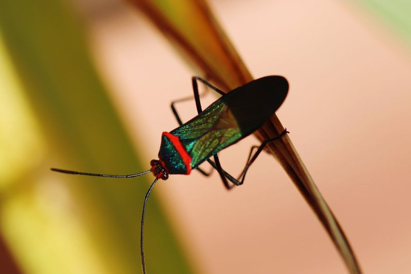 Inseto Insect