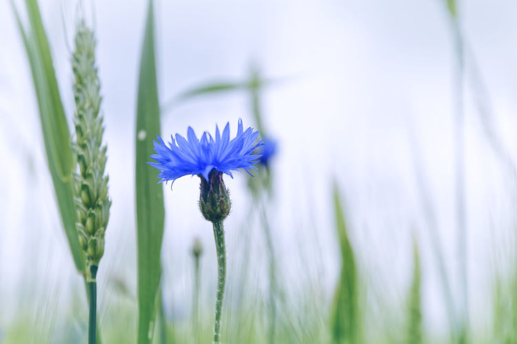 Close-up of flower blooming in field