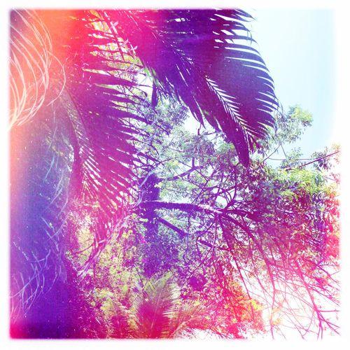 Mexico Summer