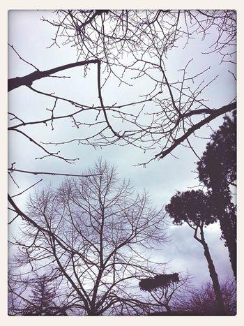 Grey Sky Sublime