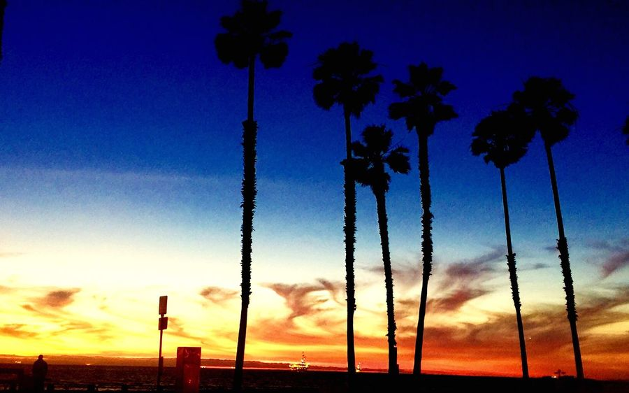 Sunset Sky Dusk Silhouette No People Growth Tree Nature Beauty In Nature Outdoors Day Palm Tree John Wick John Wick Photography Johnwickphotography Beach Sunset Huntington Beach California California Love California Coast California Dreaming