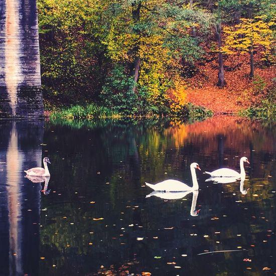 Landscape Landscape_Collection Landscape_photography Nature Nature_collection EyeEm Nature Lover Lake Birds Water Reflections Eye4photography