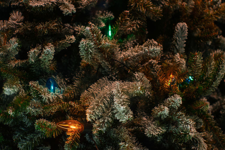Christmas tree & lights No People Plant Illuminated Tree christmas tree Celebration Decoration Christmas Decoration Christmas Lights Green Color Holiday Christmas