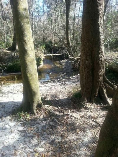 Creeks Water Beautiful Geting Inspired Beautiful Day Beautiful Nature Nature Raw