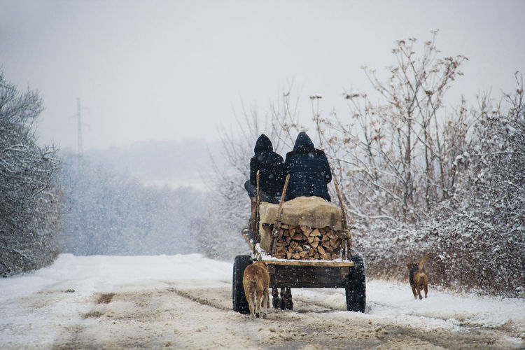 Rear view of people on horse cart against clear sky during snowfall