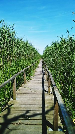 Growth Agriculture Wood - Material Day Outdoors No People Sky Nature Clear Sky Rural Scene Hidden Path