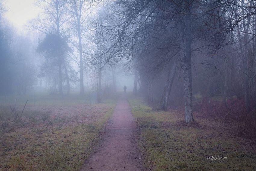 Fog Taking Photos Landscape_photography Photooftheday Nature Phil7lphotos Schwarzwald Fotografia Photo Photographer Landscape #Nature #photography Landscape_Collection Landscapes Photography People Photography